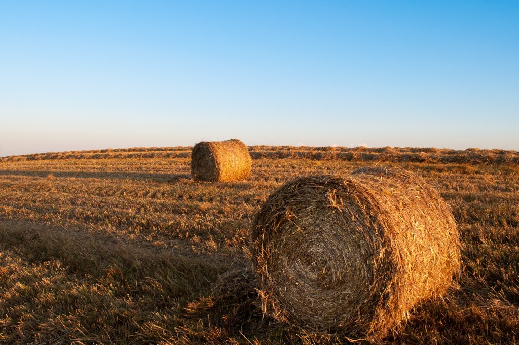 Canva - Brown Hay Stocks1