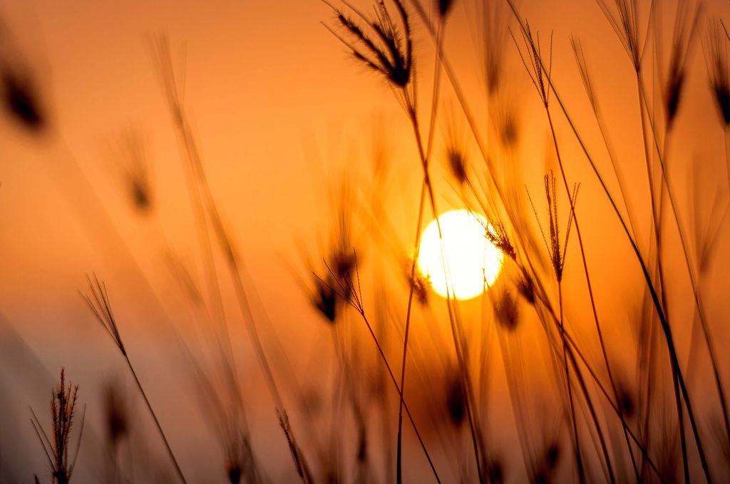 Canva - Silhouette Photography Of Grass