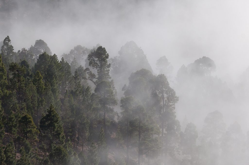 Canva1 - Person Showing Forest Covered in Fog